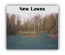 new lawns